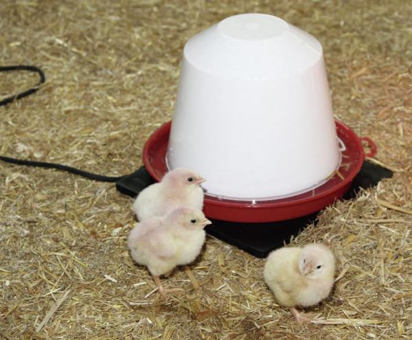 Wärmeplatte für Kleintiere und Geflügeltränken Auch zur Erhaltung der Nestwärme