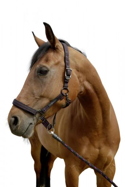 Pferdehalfter für Goleygo- System, schwarz/fuchsia, Gr.00