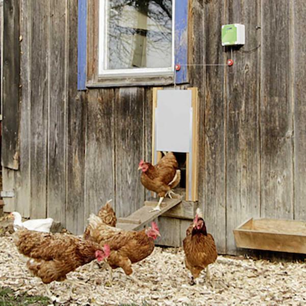 Automatische Hühnertür Komplett-Set, inkl. Schiebetür